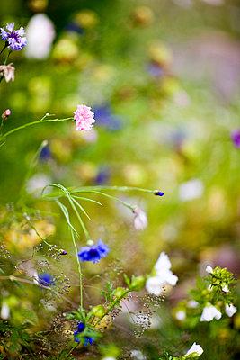 A flowerbed Sweden - p31223745f by Ulf Huett Nilsson