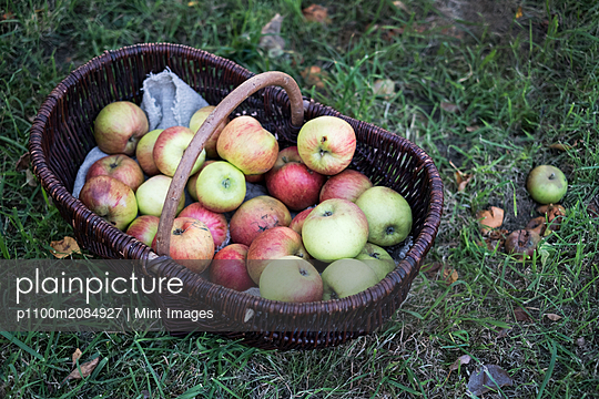 High angle close up of freshly picked apples in a brown wicker basket. - p1100m2084927 by Mint Images
