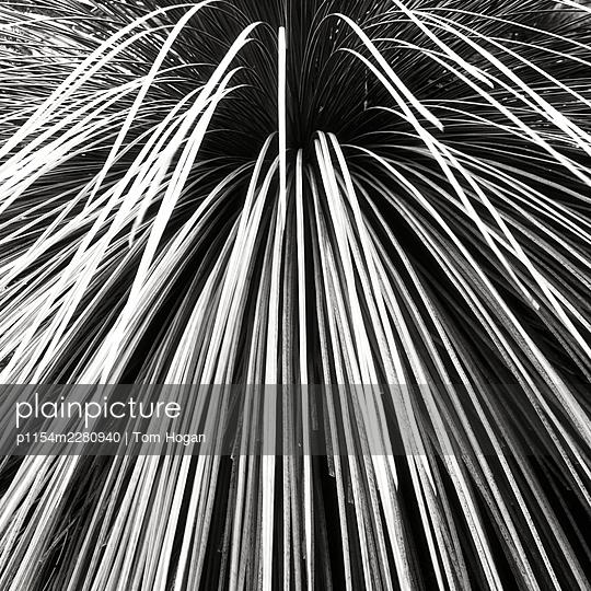 Beach grass - p1154m2280940 by Tom Hogan