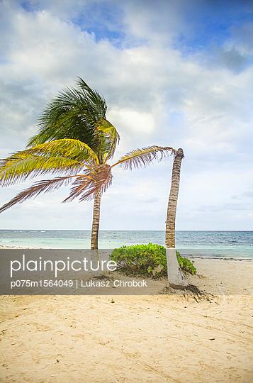 Palmen im Wind - p075m1564049 von Lukasz Chrobok
