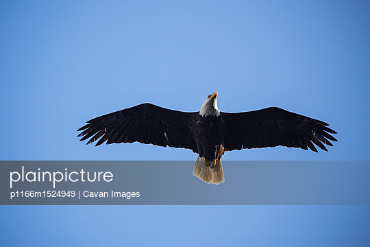 p1166m1524949 von Cavan Images