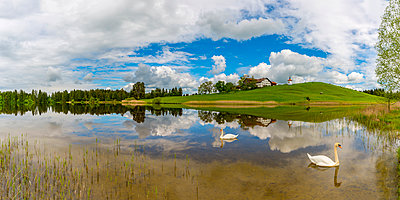 Germany, Allgaeu, Hegratsried lake with swans - p300m1460053 by Walter G. Allgöwer