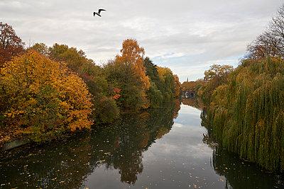 Eine Möwe fliegt über ein Fleet im Herbst, Hamburg - p1696m2296584 von Alexander Schönberg