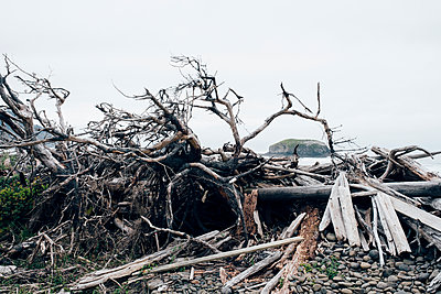 Oregon Coast Driftwood Pile - p1262m1440879 by Maryanne Gobble