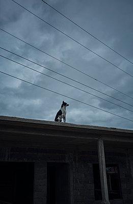 Hund auf einem Dach (Vinales, Kuba) - p1515m2101076 von Daniel K.B. Schmidt