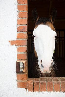 Pferd im Stall - p435m938460 von Stefanie Grewel
