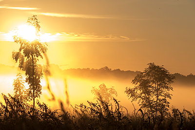 Sunrise in the morning fog - p739m1170256 by Baertels