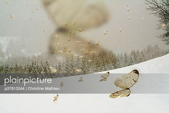 Butterflies in the snow - p37813244 by Christine Mathieu