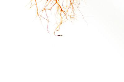 Samenkapsel - p1086m949248 von Carrie Marie Burr