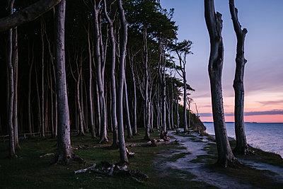 Buchenwald an der Ostsee Küste - p1600m2230753 von Ole Spata