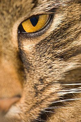 Detail shot of a cat's eye - p1025m780116f by Björn Andrén