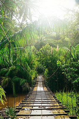 Costa Rica, Wooden bridge and ropes over the river in Corcovado. - p300m1549791 by Kiko Jimenez