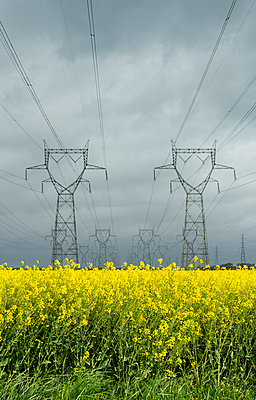 Power lines over field of flowers - p429m663888 by Mischa Keijser