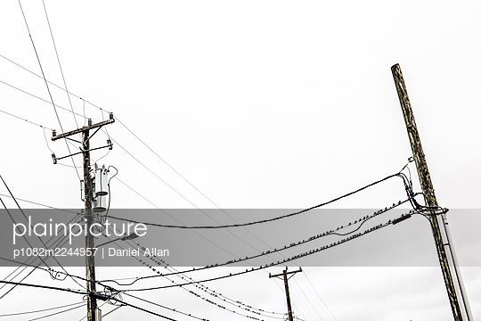 USA, Birds on telegraph pole - p1082m2244957 by Daniel Allan
