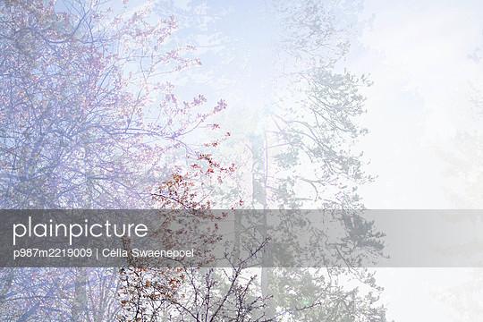 Le printemps 02 - p987m2219009 by Célia Swaenepoel