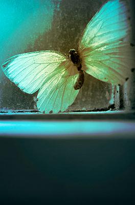 Schmetterling - p1248m1045188 von miguel sobreira