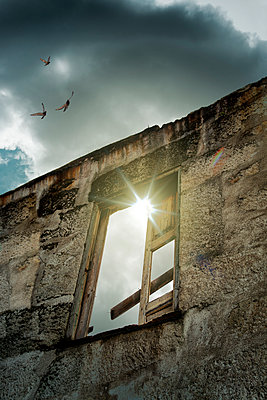 Birds over deserted house - p1248m1451986 by Miguel Sobreira