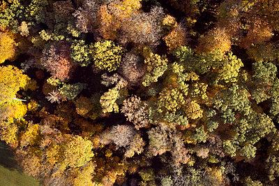 Indian Summer, Forest - p1294m2231497 by Sabine Bungert