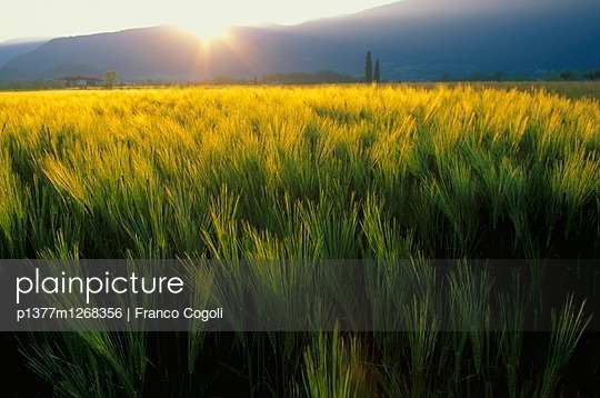 p1377m1268356 von Franco Cogoli