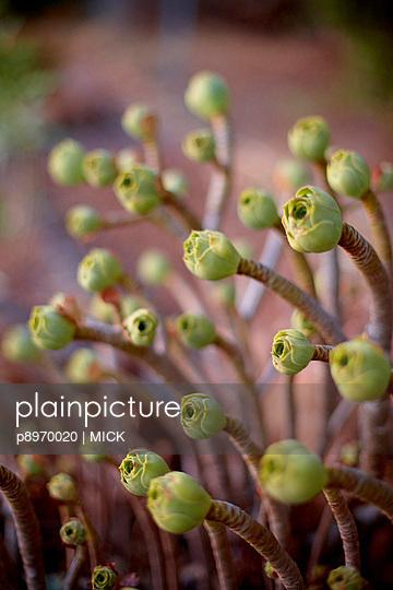 Bizarre Pflanzen - p8970020 von MICK