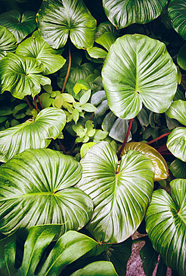 Exotic Foliage - p1248m1203405 by miguel sobreira