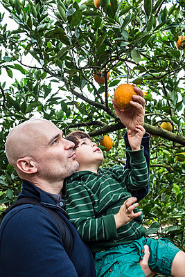 Orange Picking - p535m965948 by Michelle Gibson