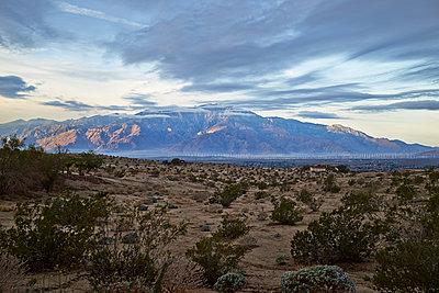 Palm Springs - p584m1026288 by ballyscanlon