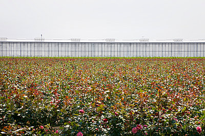 Flowers in front of Greenhouse - p836m1444928 by Benjamin Rondel
