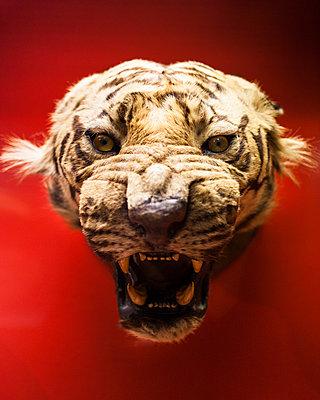 Tiger - p1214m1116225 von Janusz Beck