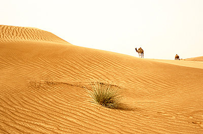 Kamele in der Wueste - p2685209 von Christof Mattes