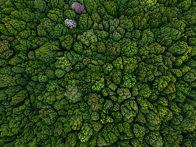 Indonesia, Bali, Bedugul, Bali Botanic Garden - p300m2070229 by Konstantin Trubavin
