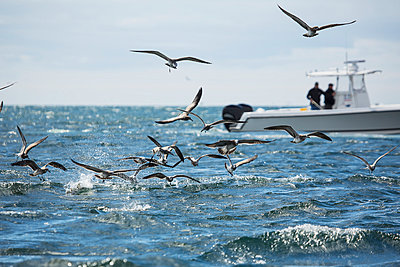 Flock of birds flying over the water and fishermen fishing of a boat; Martha's Vineyard, Massachusetts, United States of America - p442m1033683 by Eric Kulin