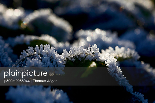 Crystals of winter frost - p300m2256044 by Thomas Jäger