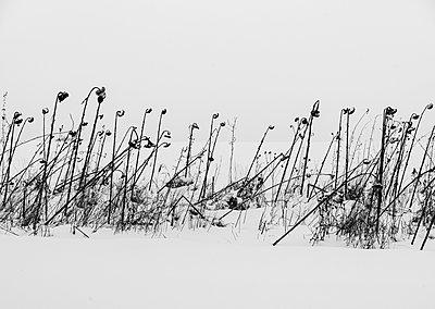 Winterblumen - p1649m2253081 von jankonitzki
