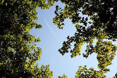 Vapour trail and green leaves in sky - p388m877162 by Ulrike Leyens