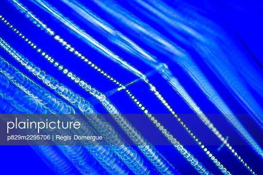 Pearls of dew on a cobweb - p829m2295706 by Régis Domergue