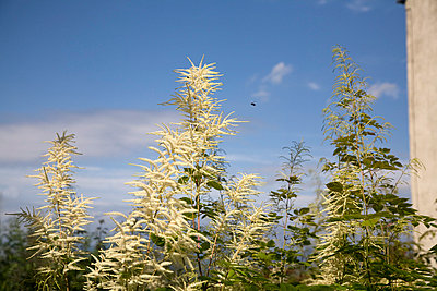 Nettle plants - p3881800 by Ulrike Leyens