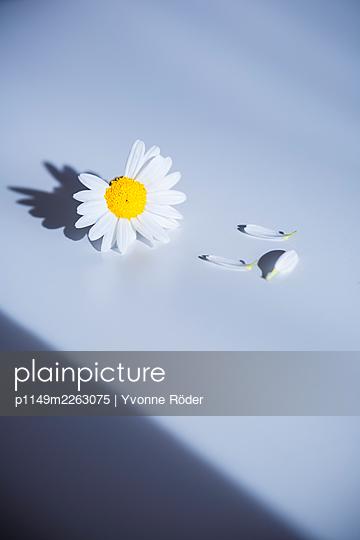 Blossom - p1149m2263075 by Yvonne Röder