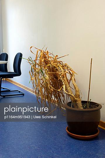 Büropflanze - p1164m951943 von Uwe Schinkel