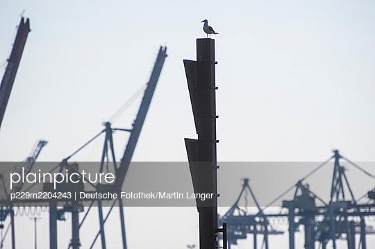 Germany, Hamburg, Seagull - p229m2204243 by Martin Langer