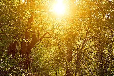Wald - p1203m1008103 von Bernd Schumacher
