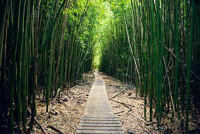 USA, Hawaii, Maui, Haleakala National Park, bamboo forest at Pipiwai Trail - p300m1019165f by Biederbick&Rumpf