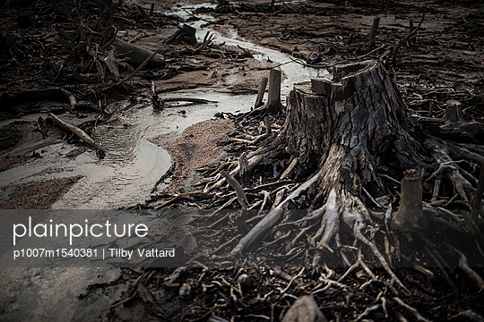 Stump and roots - p1007m1540381 by Tilby Vattard