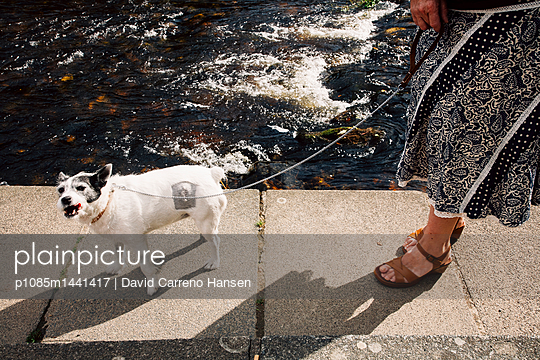 Walking the dog on the waterfront - p1085m1441417 by David Carreno Hansen