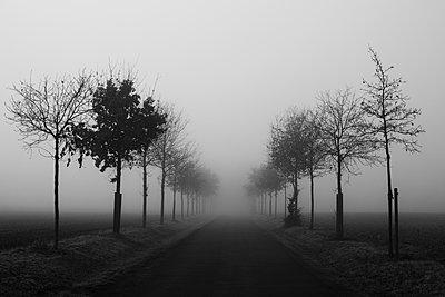 Baumallee im Nebel - p1574m2151344 von manuela deigert