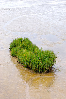 Grasbüschel im Wasser - p260m918264 von Frank Dan Hofacker