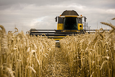 Corn harvest - p1057m1440419 by Stephen Shepherd