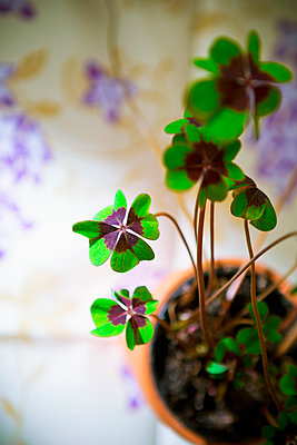 Lucky clover - p1149m2126924 by Yvonne Röder