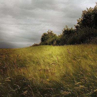 Field Study - p1633m2208977 by Bernd Webler