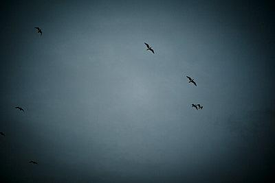Vögel am Himmel - p718m1223184 von Arne Landwehr